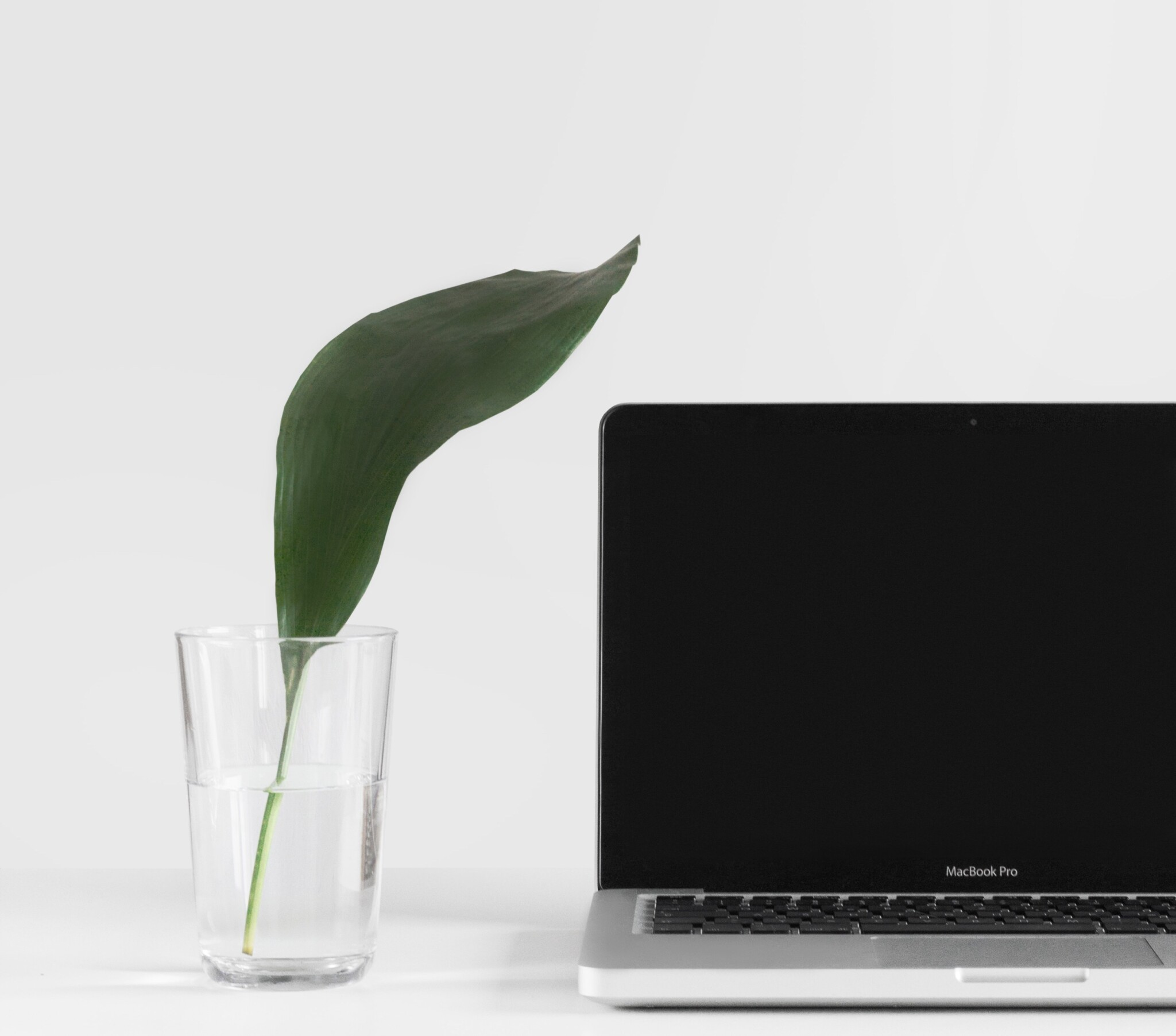 Plant with laptop next to it